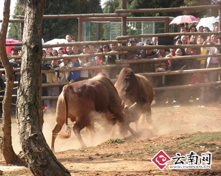 云南野生动物园春节黄金周迎来客流高峰