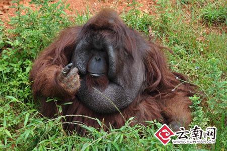 野生动物园邀您出主意