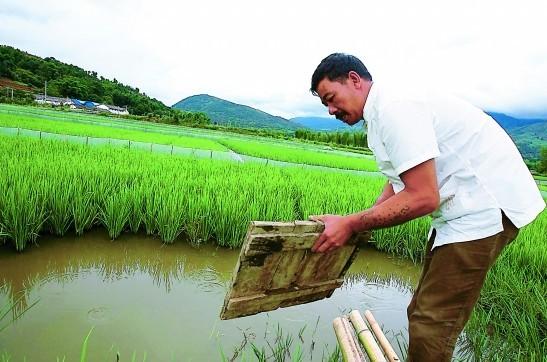 稻田养鱼排水口设计图展示