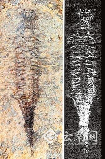 由云南大学古生物学家侯先光教授领衔的国际研究