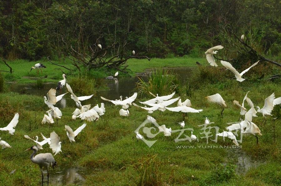 普洱太阳河国家公园全面启动野生动物本底调查工作