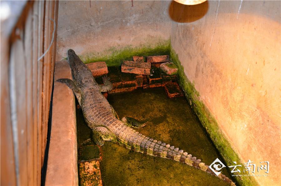 野生动物园小动物状态不佳忙坏饲养员