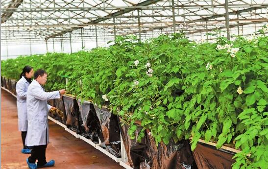 云南宣威建成现代农业种业园图片