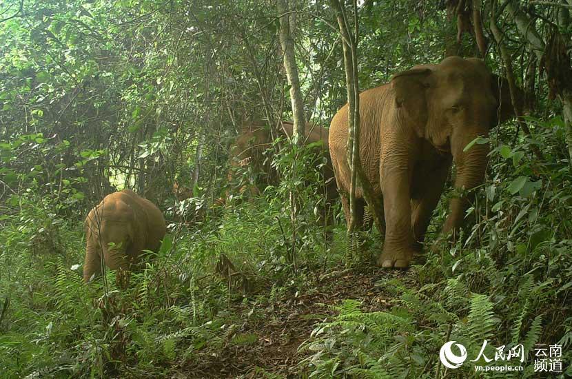 图片由南滚河国家级自然保护区提供