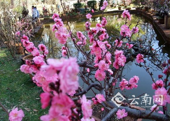 废旧物品手工制作图片春天的树