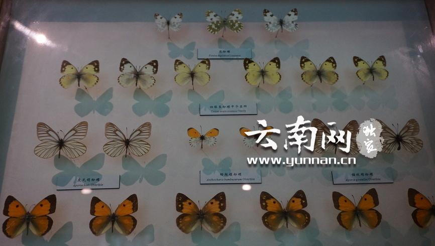 """云南网——""""公众科学日""""昆明动物博物馆邀您来看""""小蚂蚁的地下工厂"""""""