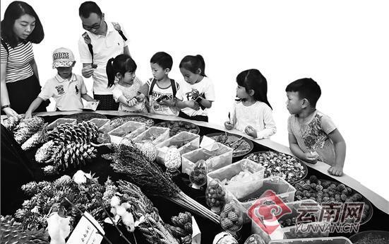 昆明植物园5000人品尝植物科普大餐