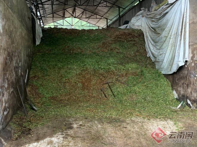 云南芒市:牛粪变成有机肥 企业